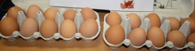 Un nouvel élevage de poules en plein air à Othée