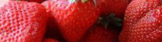 Les fraises d'Othée sont chez Albert Drisket