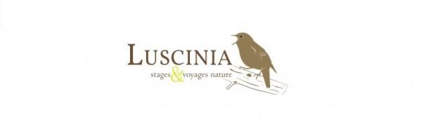Nouveau site internet et nouvelle page Facebook pour Luscinia