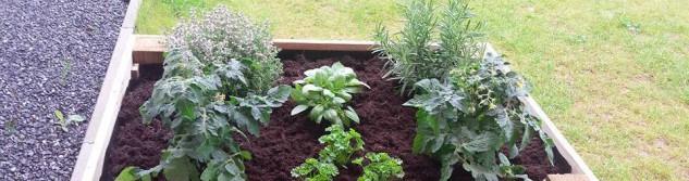Besoin de plantes pour votre jardin ?