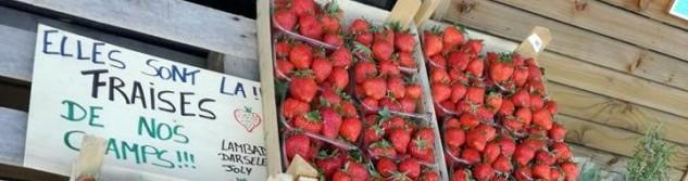 Les fraises du Potager de la Dîme proviennent désormais de leurs champs