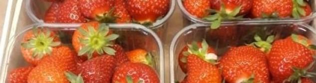 Les fraises sont arrivées aux Fraises d'Othée