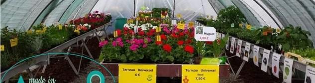 Hortiseba vous propose ses plantes et fleurs de saison