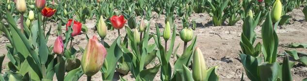 Des fleurs à couper pour un plaisir coloré Made in Awans